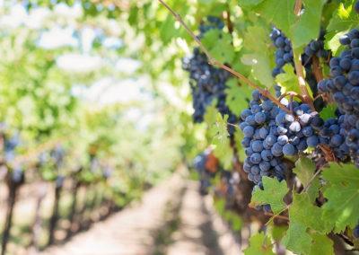Visite du village de St Emilion suivie d'une visite et dégustation chez un vigneron