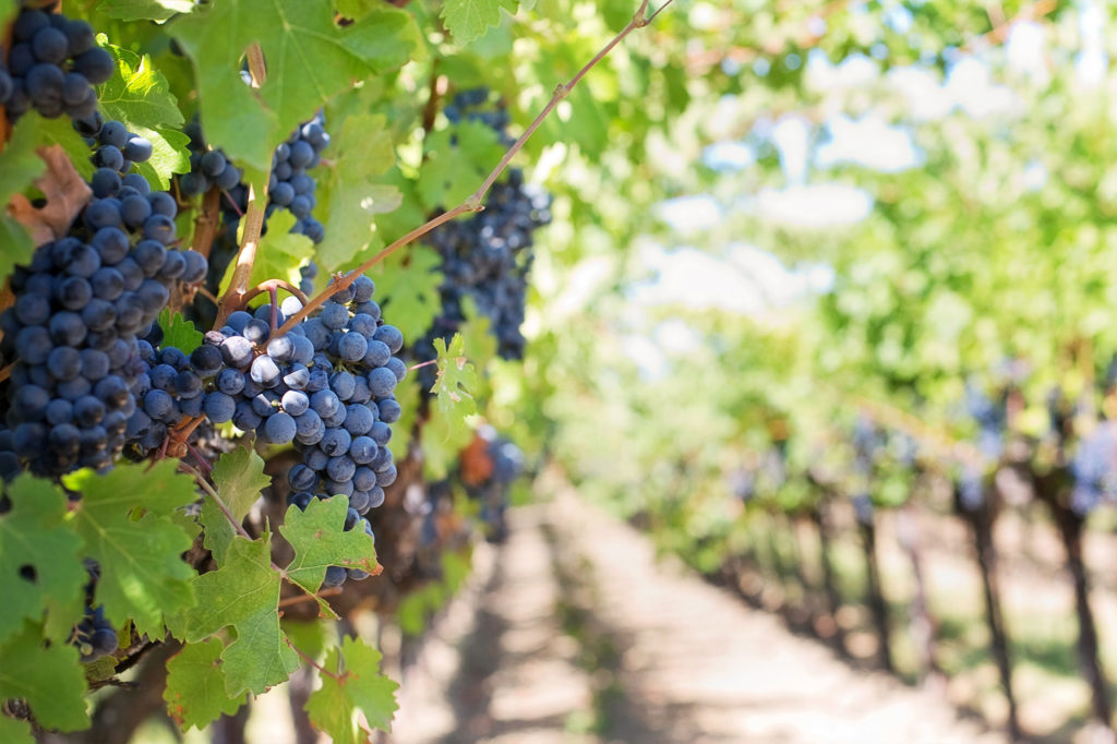 visite de la région viticole du bordelais